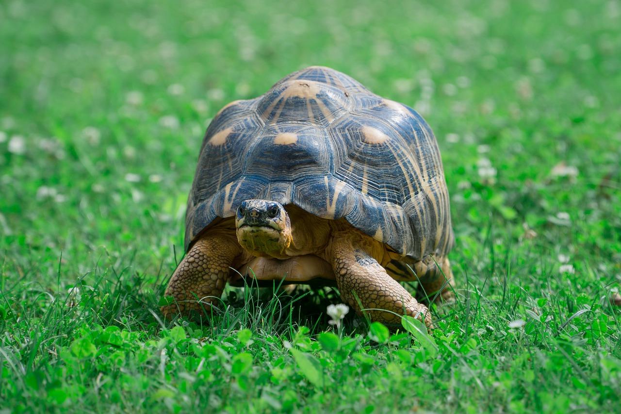 animal, turtle, zoo